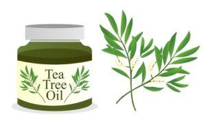 فوائد زيت الشاي للشعر والبشره