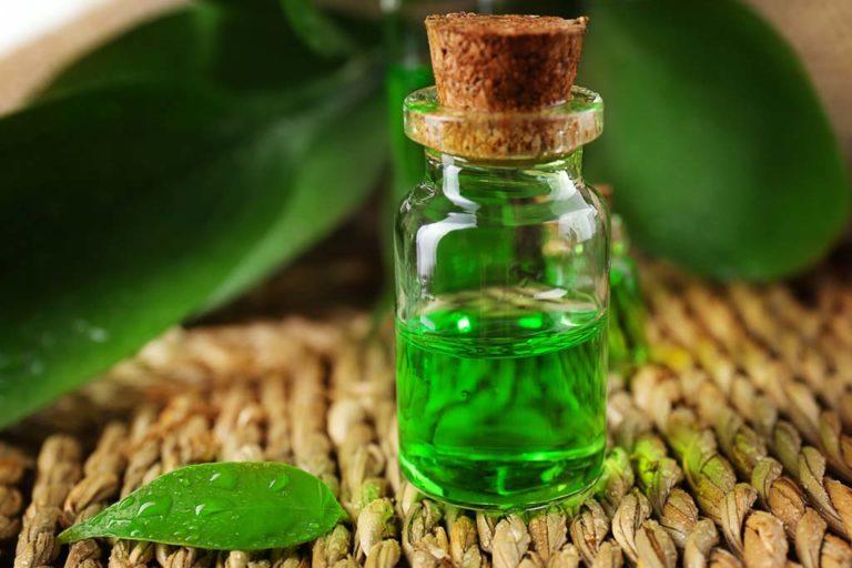 فوائد واستخدامات زيت الشاي الأخضر