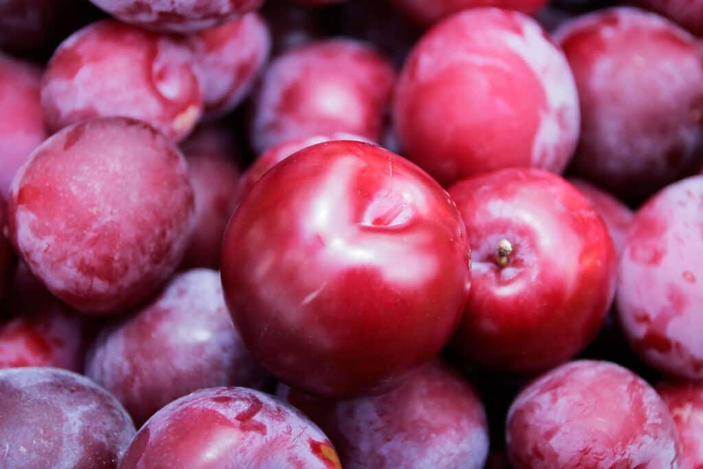 فاكهة البرقوق القولونية