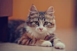 علاج الصرع عند القطط 1