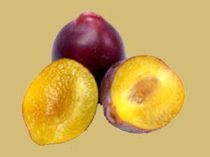فوائد فاكهة البرقوق