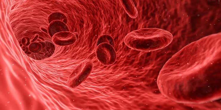 3 مكونات منزلية للتخلص من انسداد الشرايين وخفض الكوليسترول