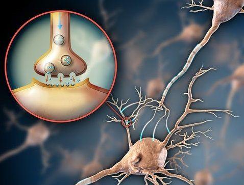 أسباب ضعف الأعصاب وتقوية الأعصاب