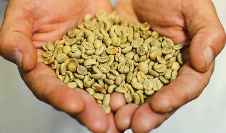 تجربتي مع القهوة الخضراء في إنقاص الوزن