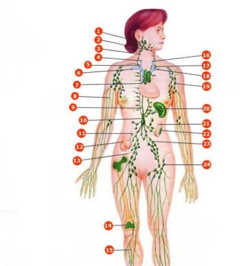اعراض التهاب الغدد الليمفاوية