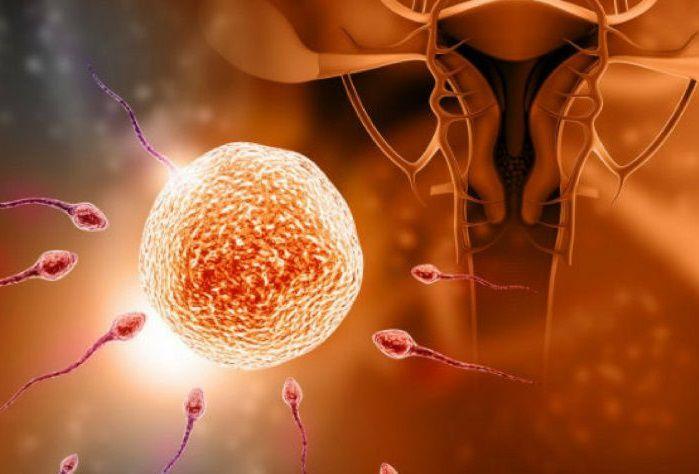 كيف يحدث الحمل بالصور 7 خطوات للحمل اعرفيها دلوقت